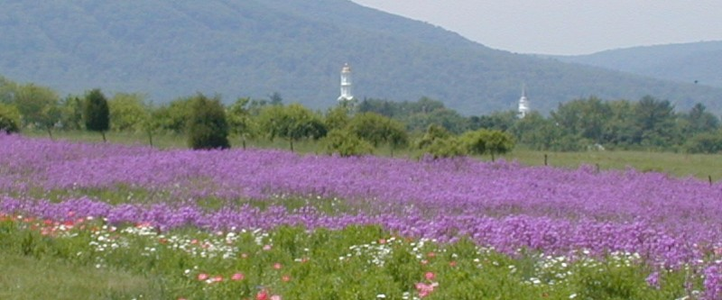 Wildflowers with church in background